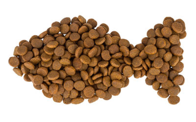 CarryFish™ – A novel ingredient for the Petfood industry. Combines the best of fish and the best of pea fractions!